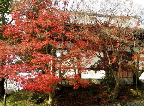 紅葉、黒谷