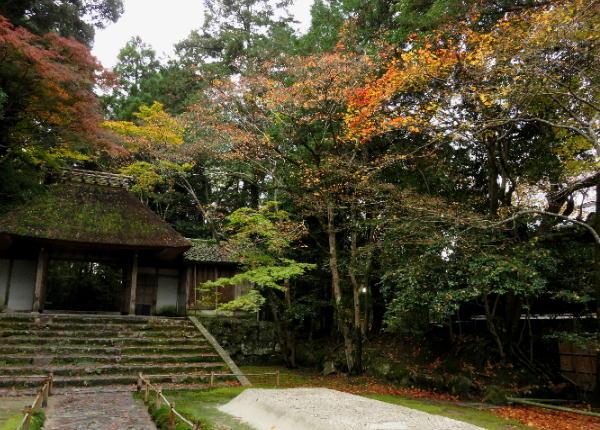 紅葉、法然院