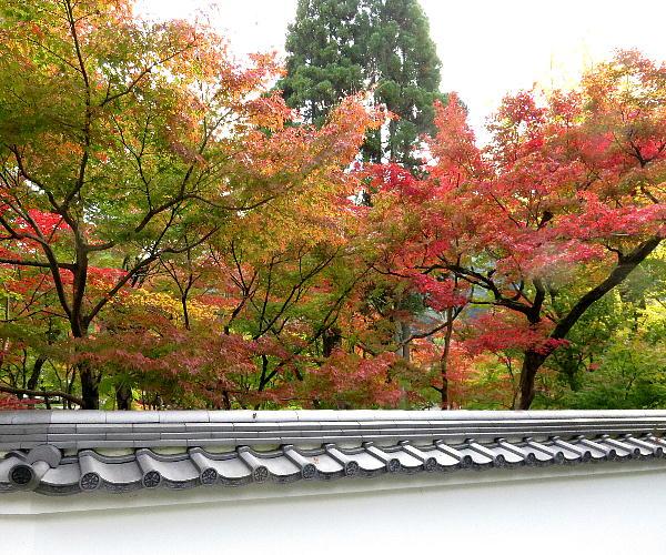 永観堂、紅葉状況