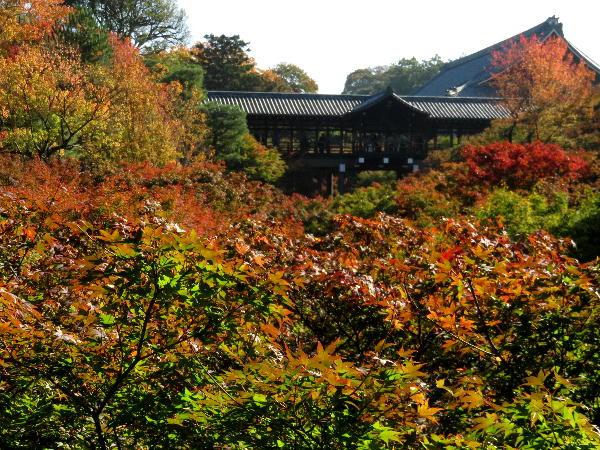 東福寺、紅葉状況