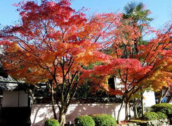 永観堂、紅葉