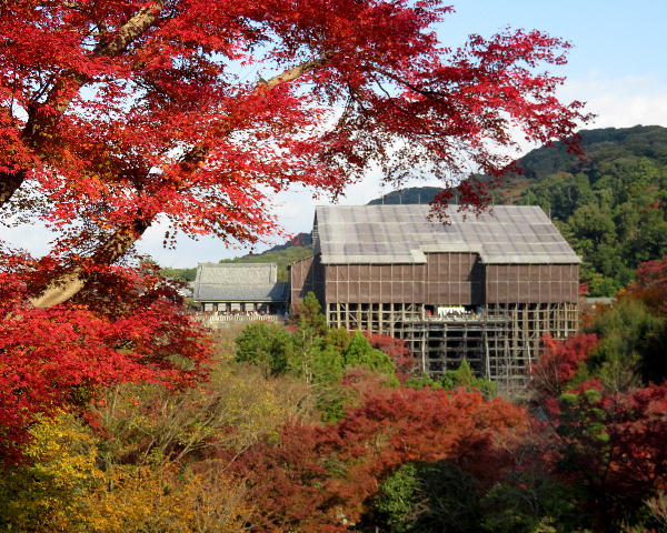 清水寺、紅葉状況