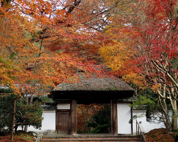 安楽寺、紅葉
