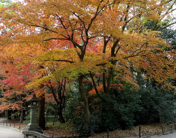 下鴨神社、紅葉