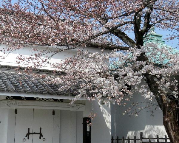 桜、本隆寺