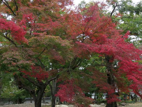 南禅寺、紅葉状況