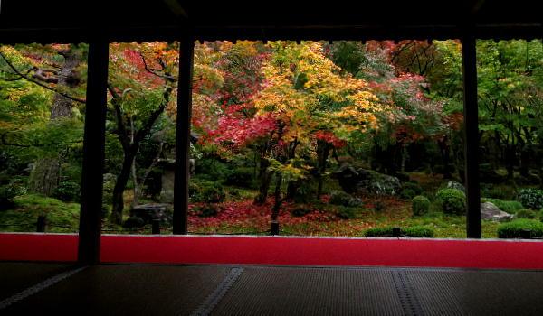 圓光寺、紅葉状況