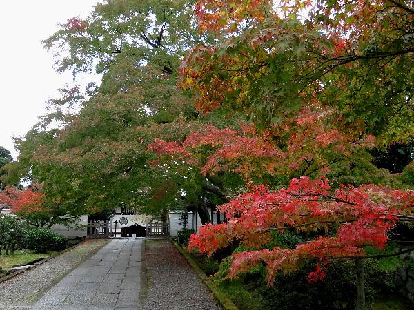 養源院、紅葉状況
