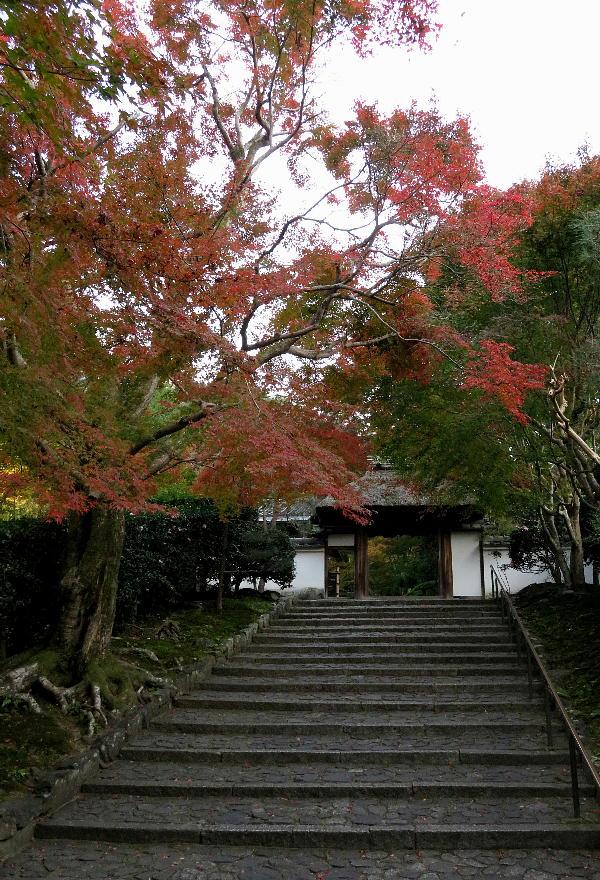 安楽寺、紅葉状況