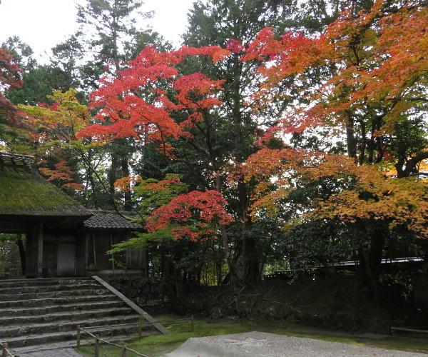 法然院、紅葉状況