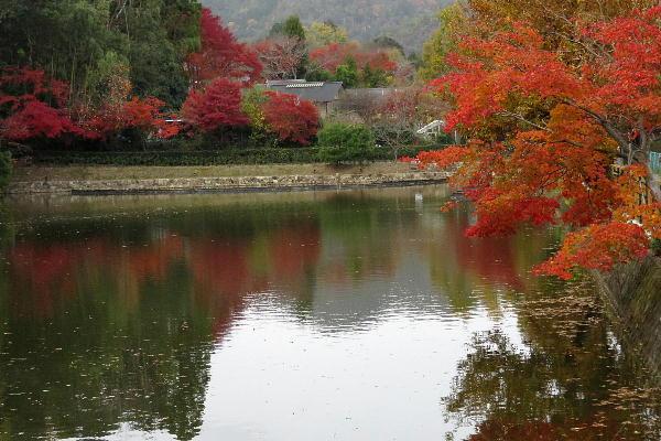 嵐山界隈、紅葉状況