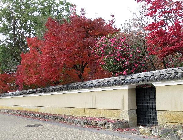 清凉寺、紅葉状況