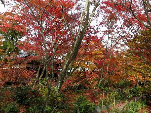 宝筺院、紅葉状況