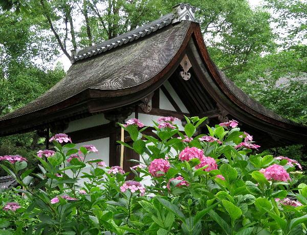藤森神社、紫陽花