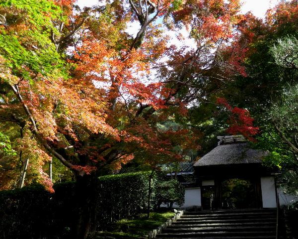紅葉、安楽寺