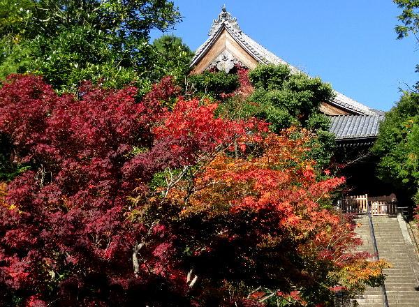 光明寺、紅葉