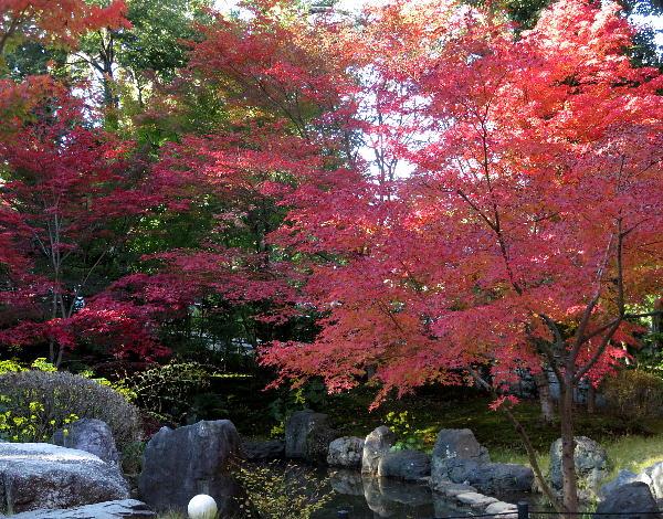 長岡天満宮、紅葉