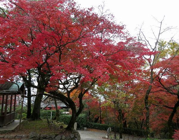 円山公園、、紅葉