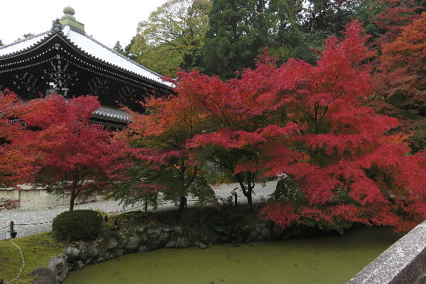 知恩院、紅葉
