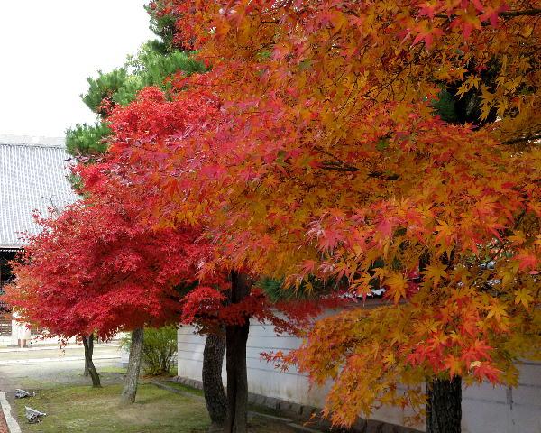 妙顕寺、紅葉