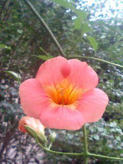 近所の玄関先の花1
