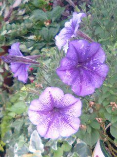 近所の玄関先の花2