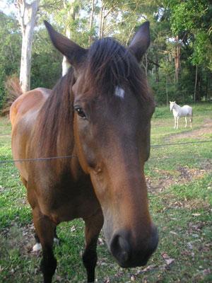 馬のお出迎え