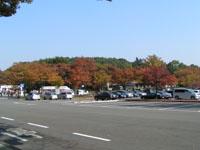 森林公園の紅葉ですだ!!