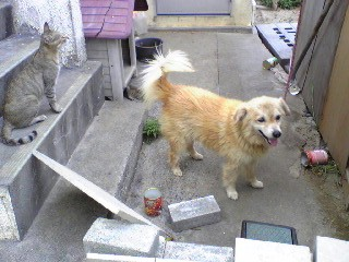 渡嘉敷の犬