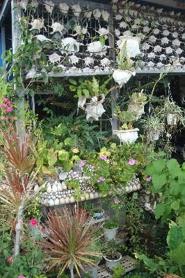 貝の家:グリーン
