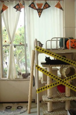 猫部屋:ハロウィン