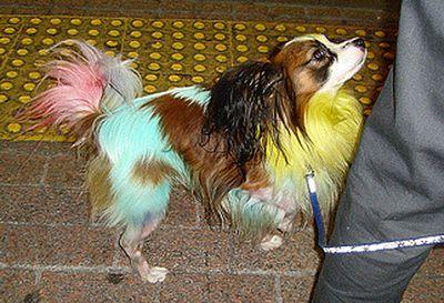 カラフル犬
