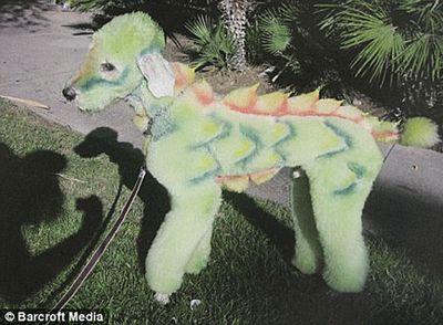 ドラゴン犬
