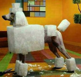 角砂糖犬?