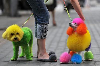 中国・武漢の犬