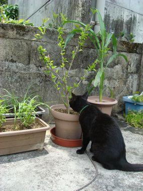 実家のゴーヤー・ベランダ猫・睡蓮の花1 025.jpg
