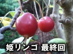 姫リンゴ 最終回
