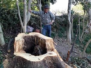 木の空洞の自然巣1.jpg