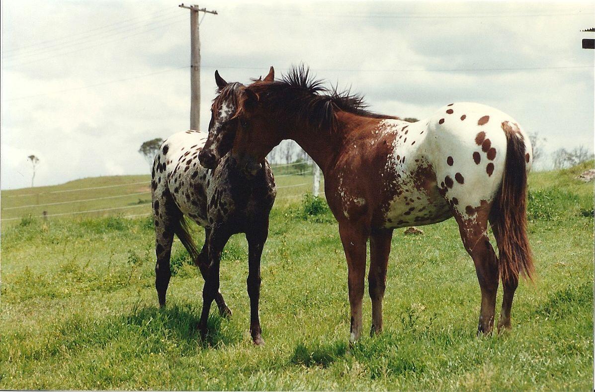 で の の 馬 疾走 蒼白