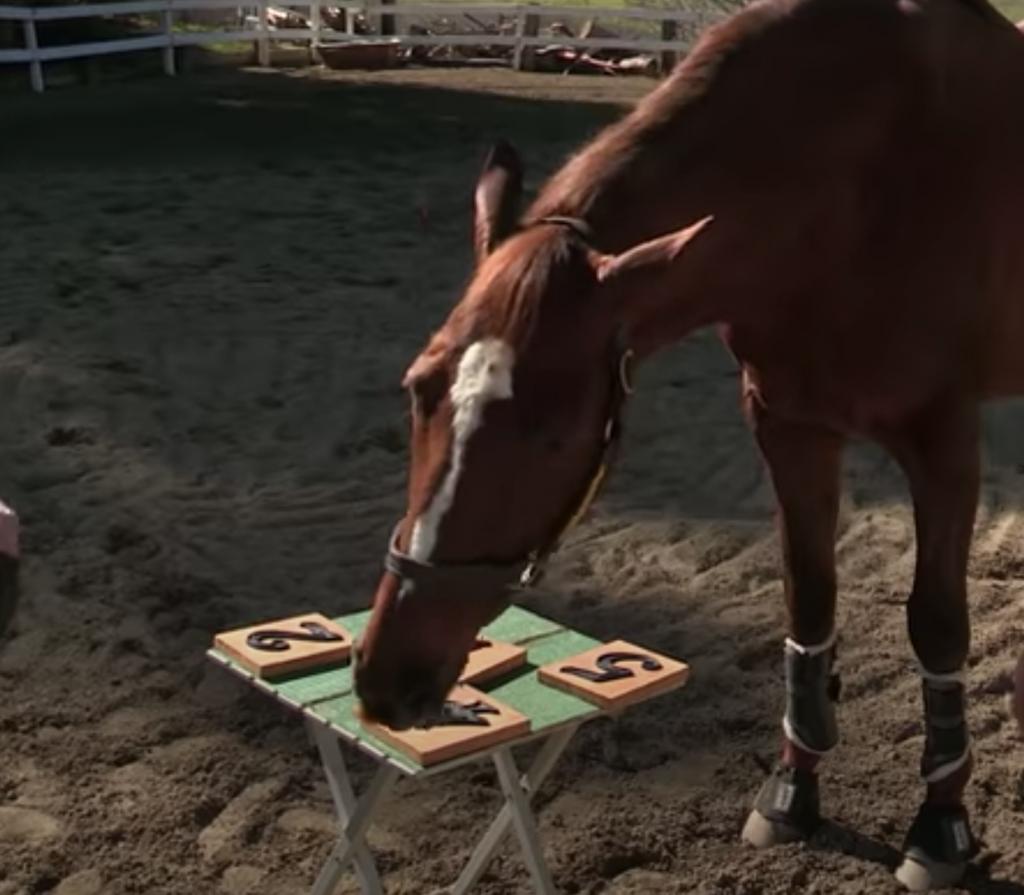 の 馬 型 種類 血液 の 馬の種類と特徴 色/仕事/馬毛/飼料/血液型/競馬