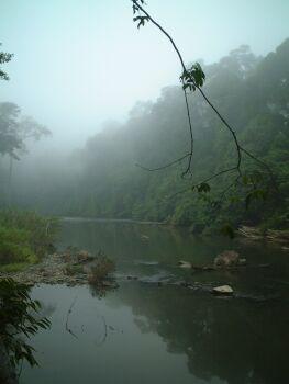 朝早くの川辺
