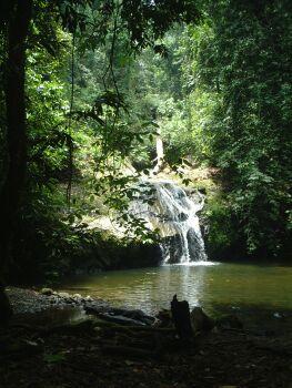 ジャングル奥地の滝