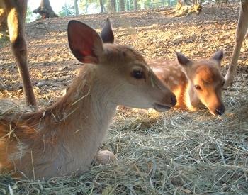 バンビさんたち