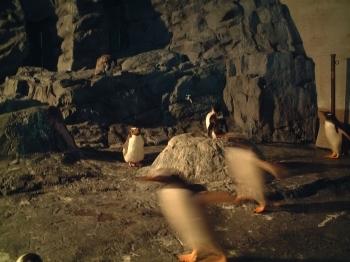 ペンギンさんたち1