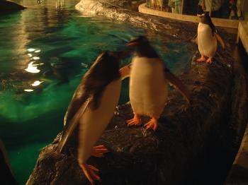 ペンギンさんたち2
