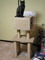 catタワー