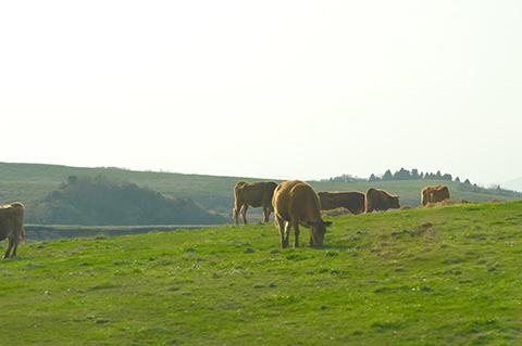 170501-2.jpg