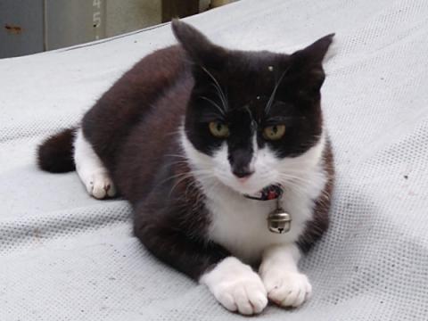 cat_meigetsuin.jpg