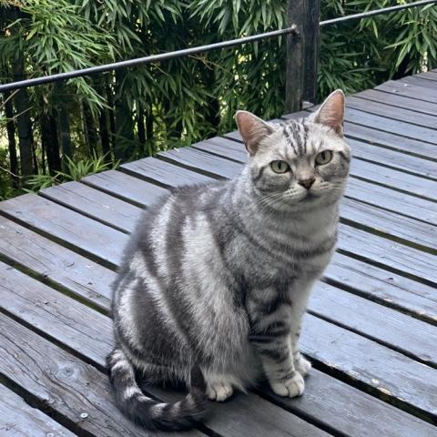cat_nest.jpg