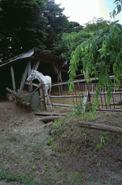 小田井の馬